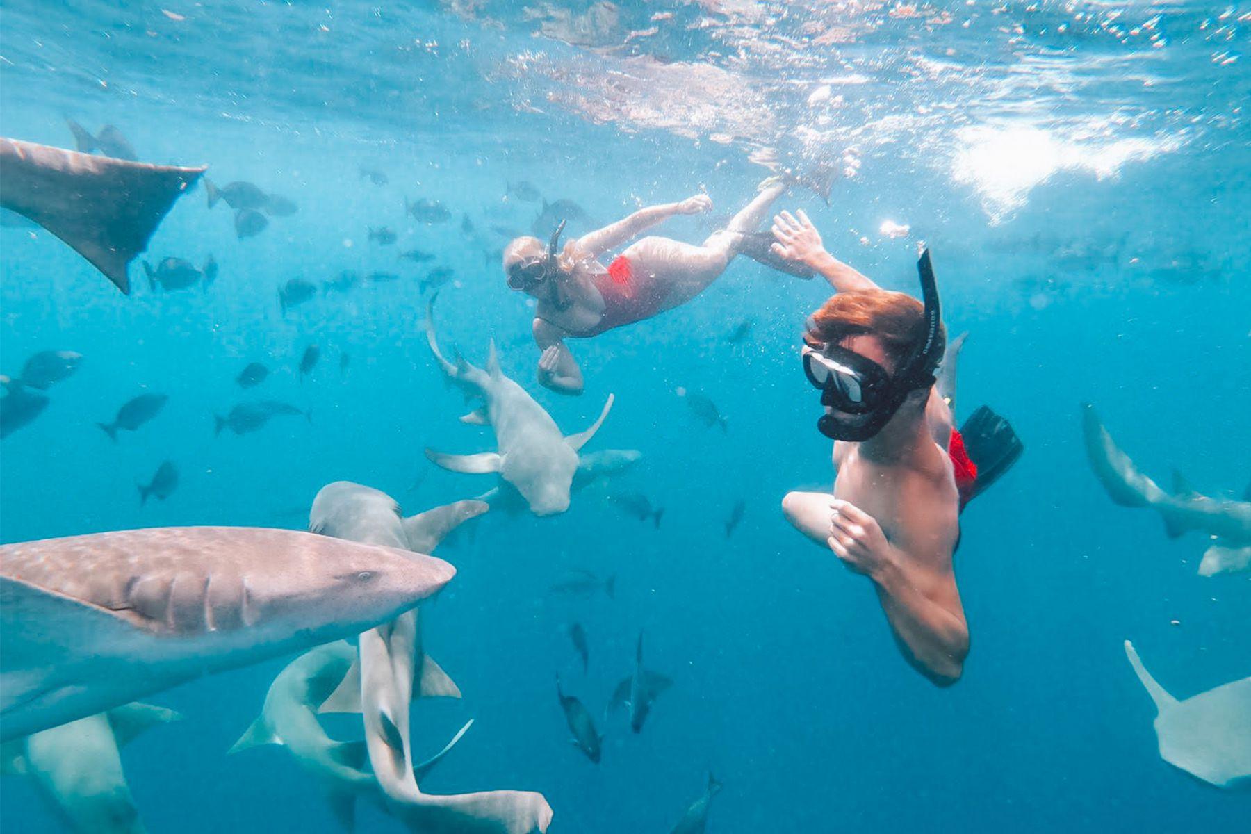 Zwemmen met haaien in Maleisië