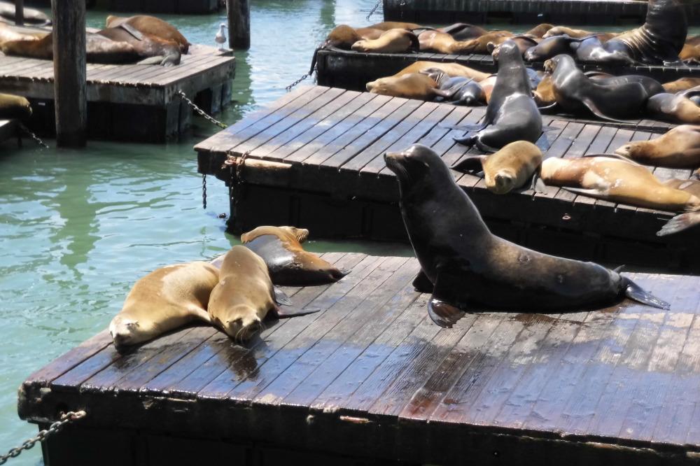 Pier 39 San Francisco - CityZapper - Lize Rensen